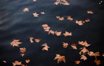 fall-leaves-in-rain