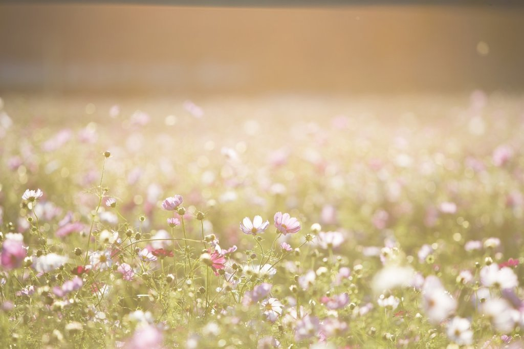 field-of-wildflowers