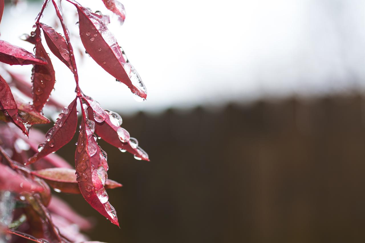 rain-on-red-leaves