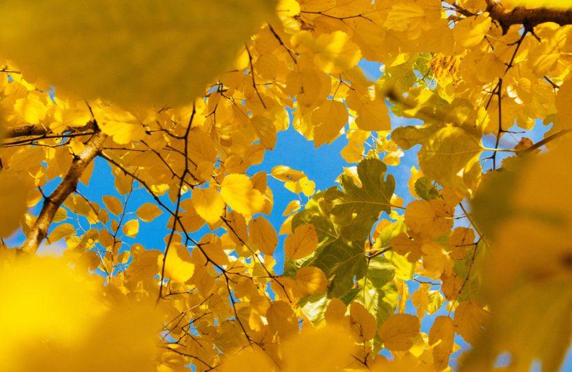pregnancy-brain-blog-yellow-falling-leaves