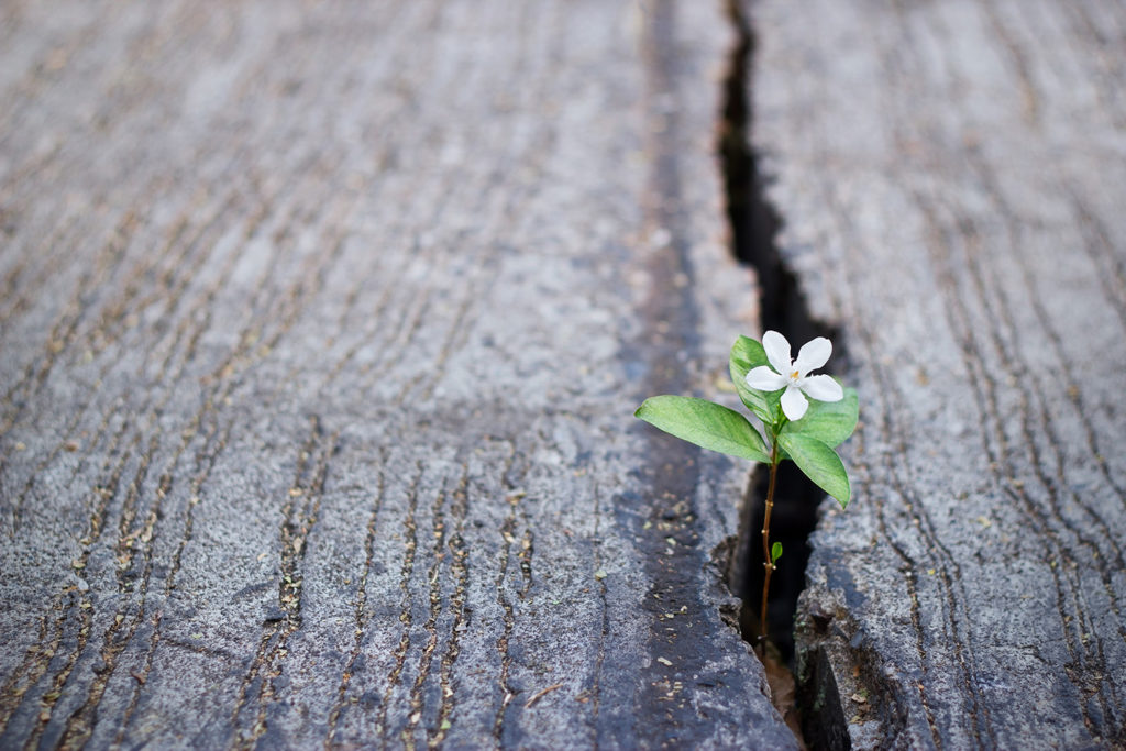 flower-growing-through-crack-hope