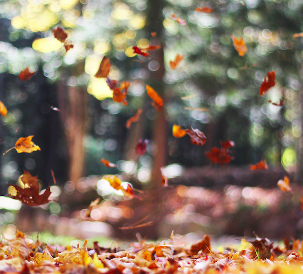 falling-leaves-in-autumn