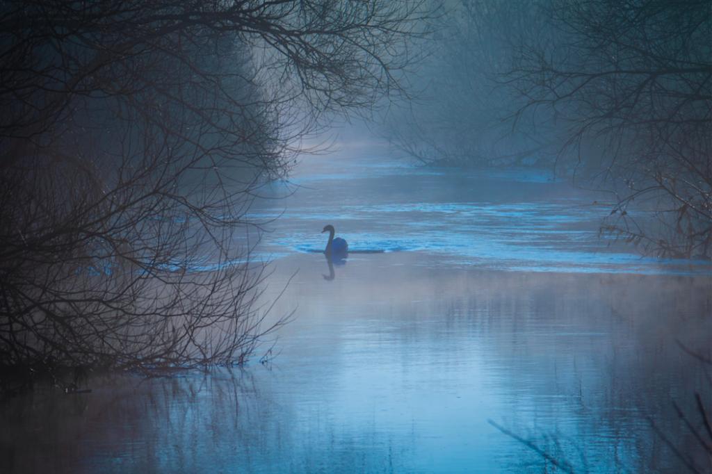 swan-on-blue-lake-in-mist